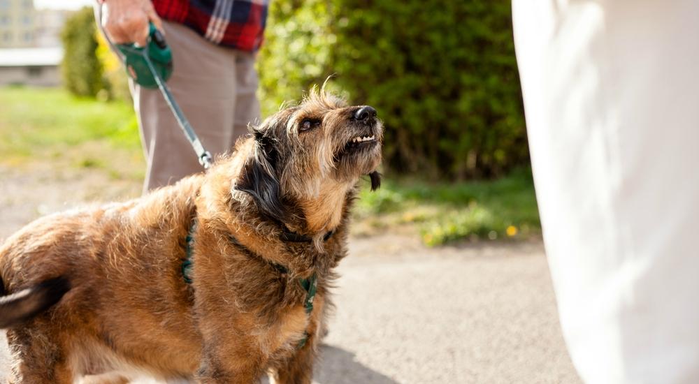 ¿Qué deberías hacer si te muerde un perro o gato de tu barrio?