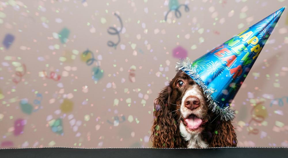 Consejo veterinario: ¿Debo preocuparme por mi mascota este fin de año?
