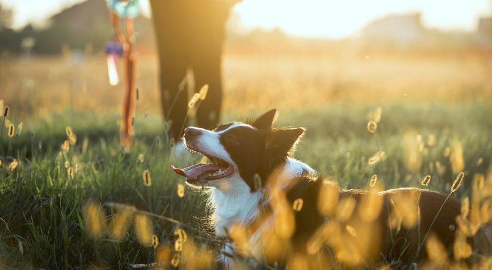 12 ideas para divertirte como nunca con tu perro