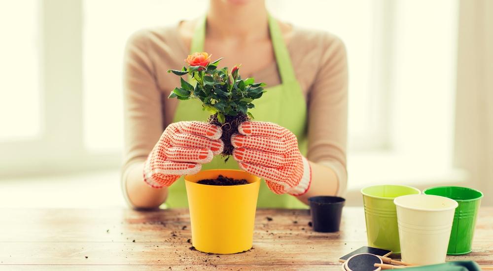 6 ventajas de tener plantas en casa