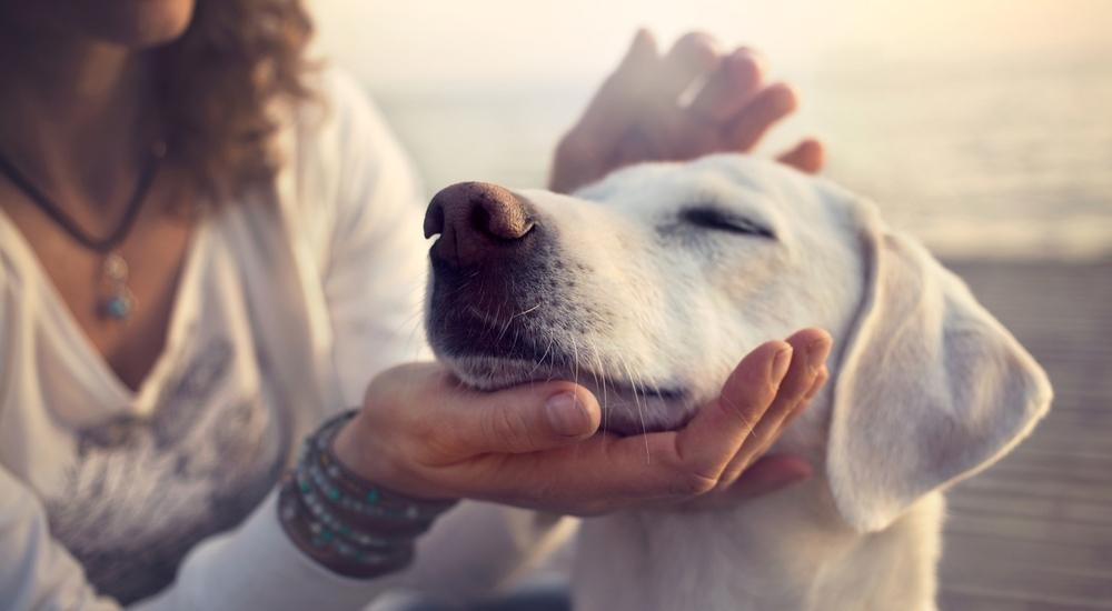 4 lugares en Lima para jugar con tu perro por horas