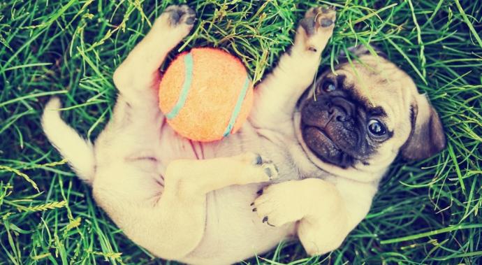 5 formas de cuidar la salud de tu perro