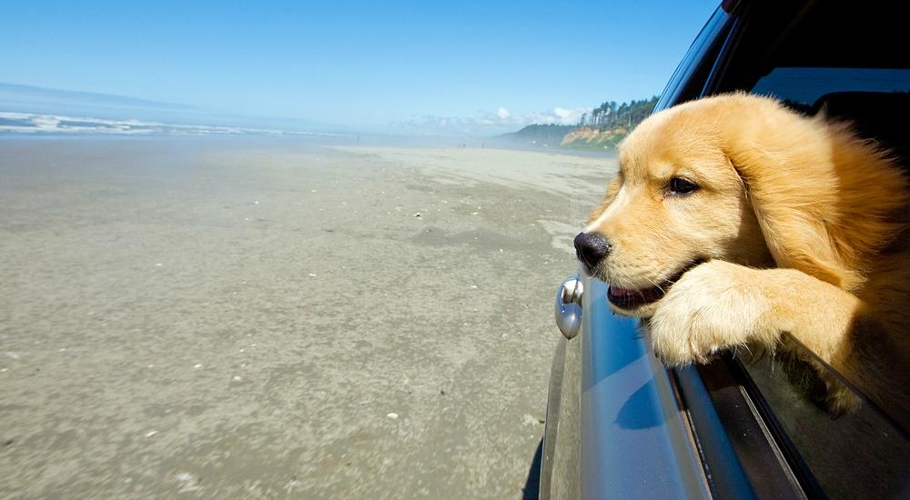 6 consejos útiles si quieres hacer un viaje con tu mascota