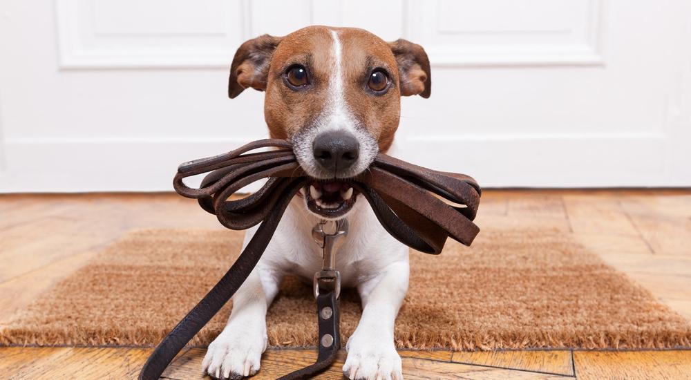 ¿Y si sales a correr con tu perro? Te damos algunas buenas razones