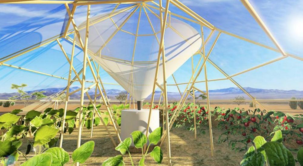 ¿Cultivar plantas en el desierto? Este invento demuestra que es posible