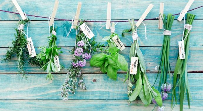5 hierbas comestibles para cultivar en tu cocina