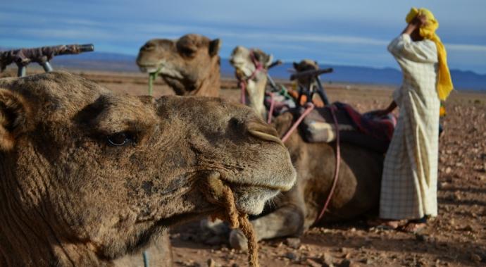 Por la Ciudad Roja: las aventuras de una peruana viajera en Marrakech