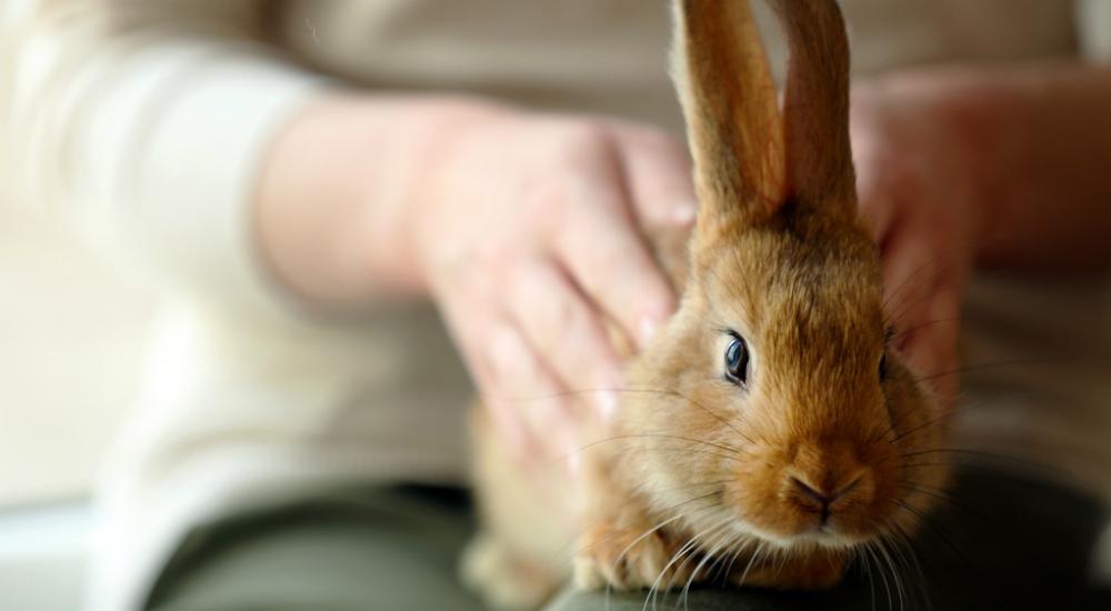 ¿Es un conejo la mascota ideal para ti?