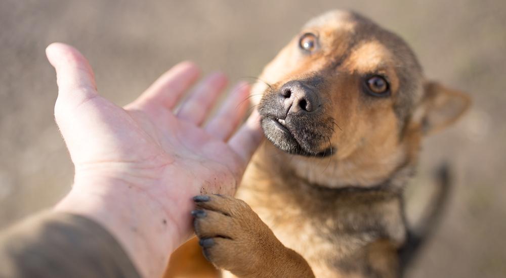 Así puedes ayudar a los animales afectados por los huaicos