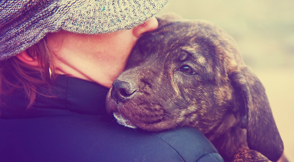 6 apps que todo dueño de mascotas querrá tener