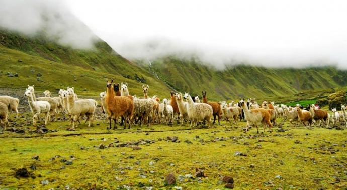 Llama Pack, turismo global y tradición local