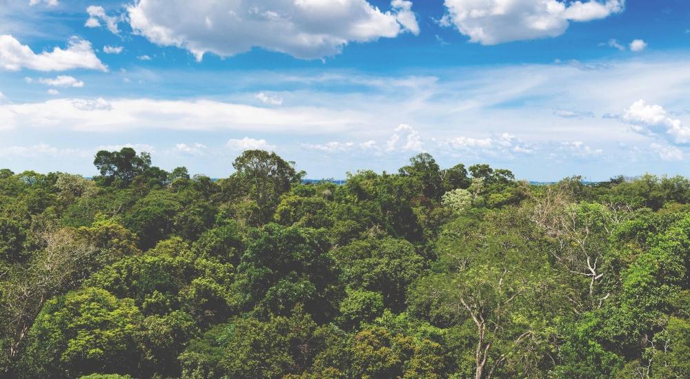 Ecoguerreros del Perú y el mundo