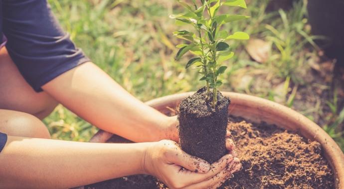 Gu a f cil para cultivar 3 vegetales en casa vive bien for Cultivar vegetales en casa