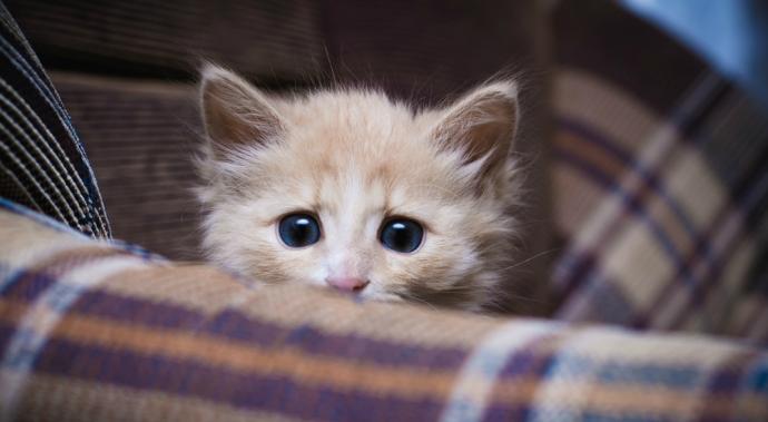 ¿Viste el viral de los gatos asustados del pepino? ¡No lo repitas en casa!